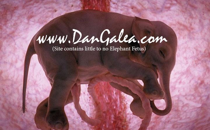 Elephant fetus